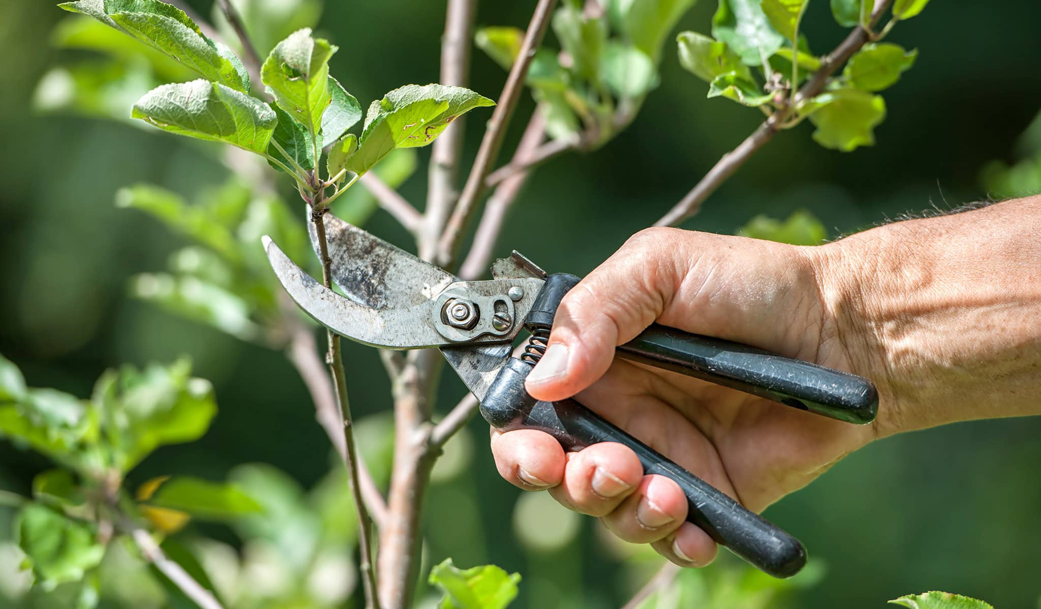 Arbor Services worker pruning a tree